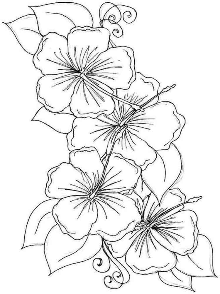colouring pages hibiscus flower hibiscus flower coloring pages download and print flower pages colouring hibiscus
