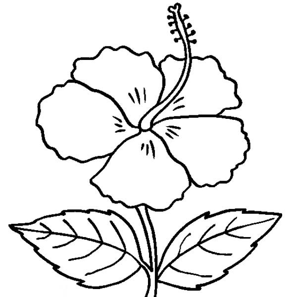 colouring pages hibiscus flower hibiscus flower coloring pages download and print hibiscus pages colouring flower