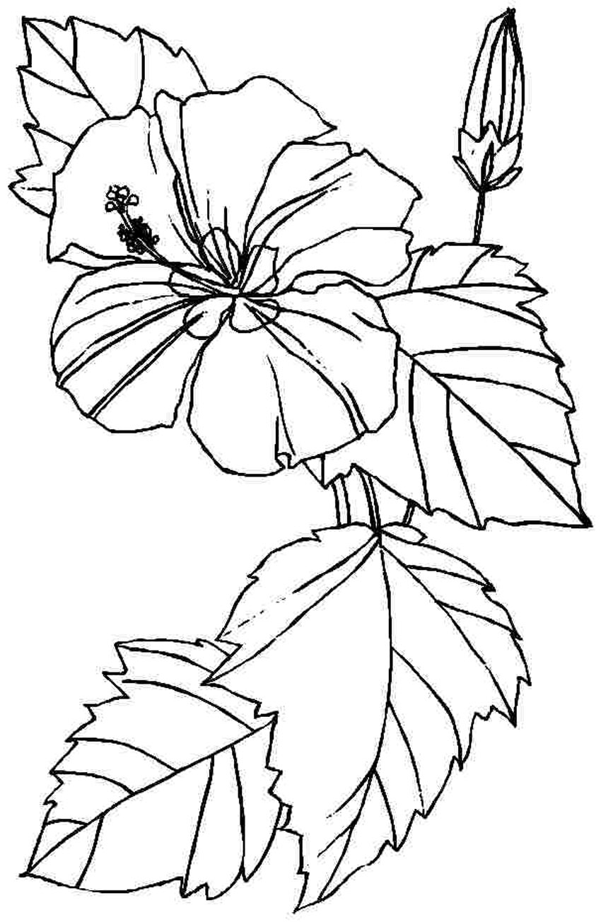 colouring pages hibiscus flower hibiscus flower in bloom coloring page color luna hibiscus flower pages colouring