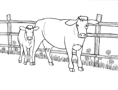 colouring pages of cow cow to colour in of pages colouring cow