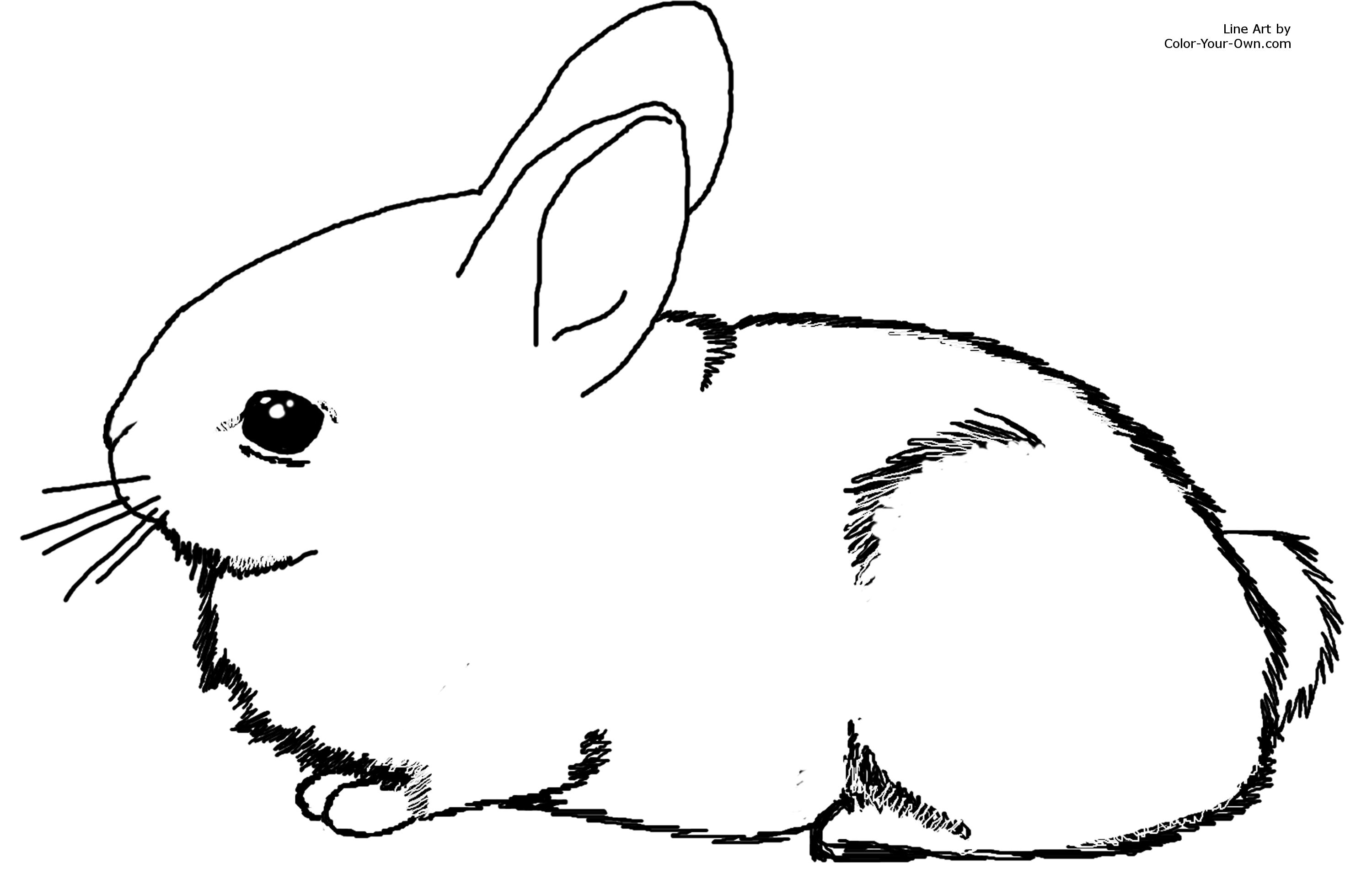 colouring pages rabbit adorable baby cottontail rabbit bunny coloring page pages colouring rabbit