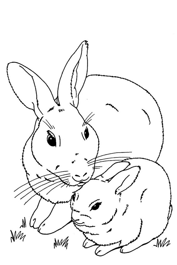 colouring pages rabbit cute rabbit drawing at getdrawings free download rabbit colouring pages