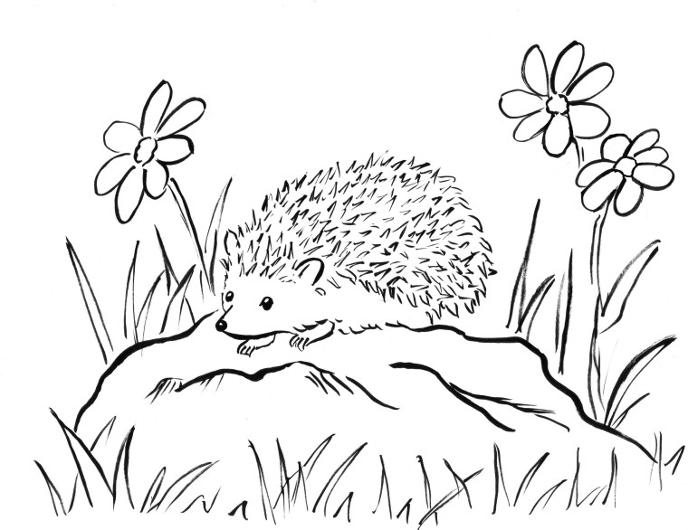 colouring picture hedgehog cute hedgehog drawing at getdrawingscom free for colouring hedgehog picture