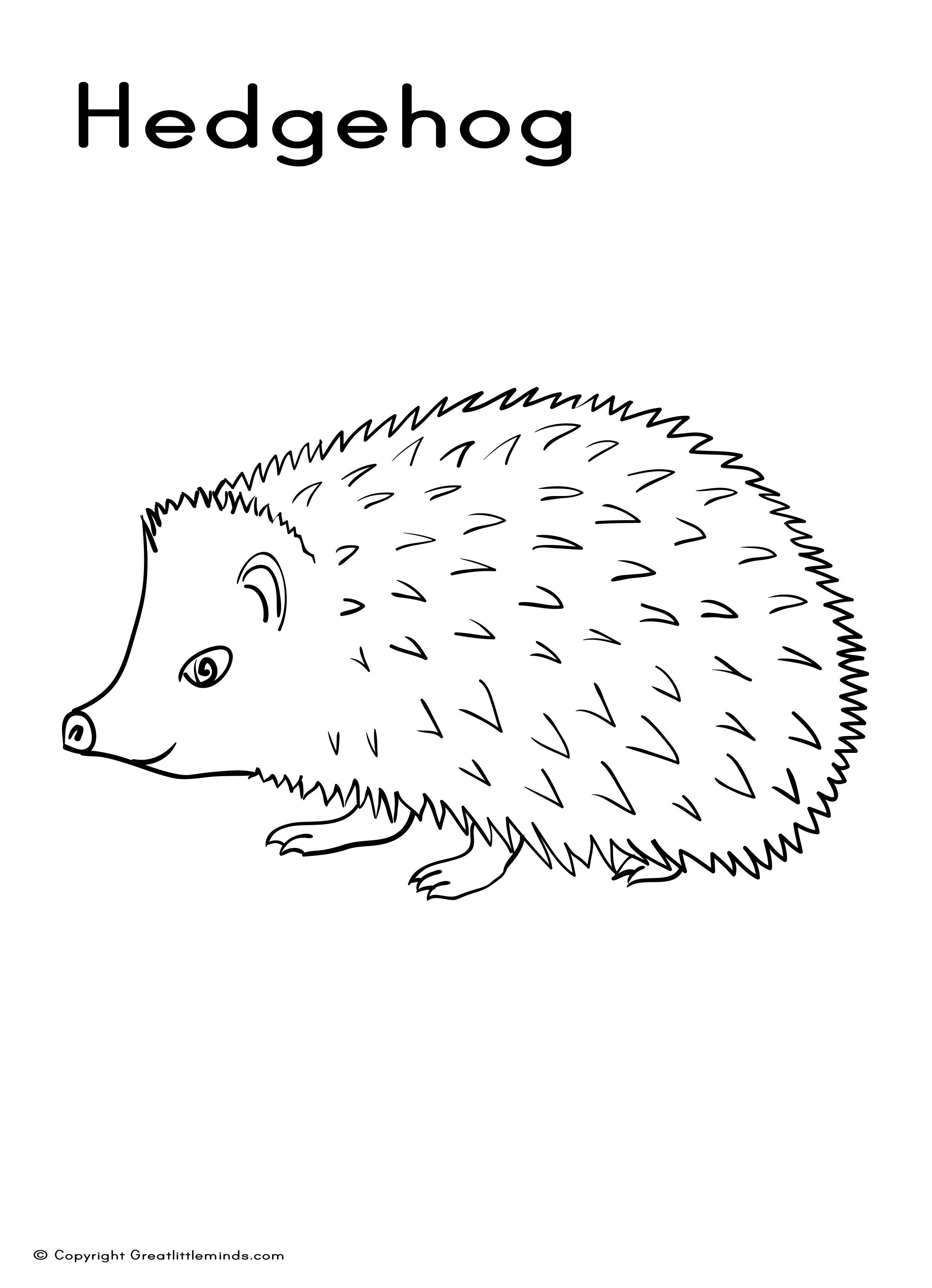 colouring picture hedgehog hedgehog 4 animals printable coloring pages hedgehog colouring picture