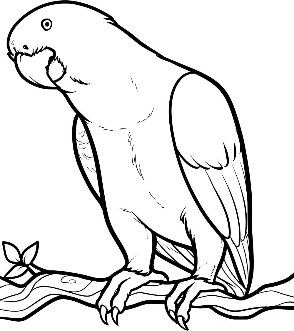 colouring pictures of birds 17 best images about birds on pinterest coloring pages of pictures colouring birds