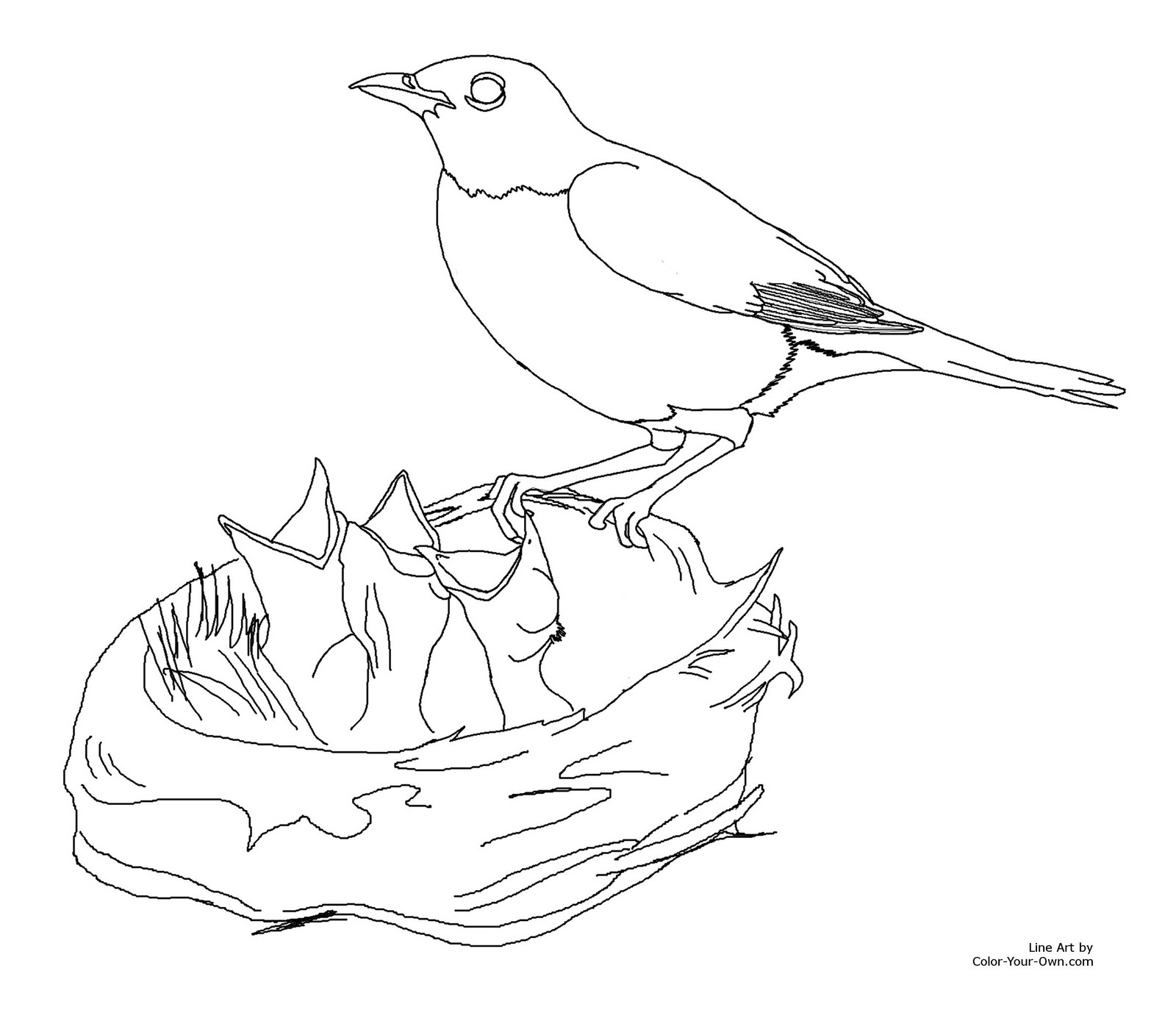 colouring pictures of birds free printable kids coloring pages of birds bird colouring birds pictures of