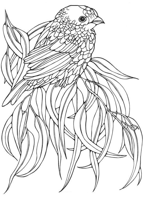 colouring pictures of birds line art coloring page bird with blossoms the colouring birds of pictures