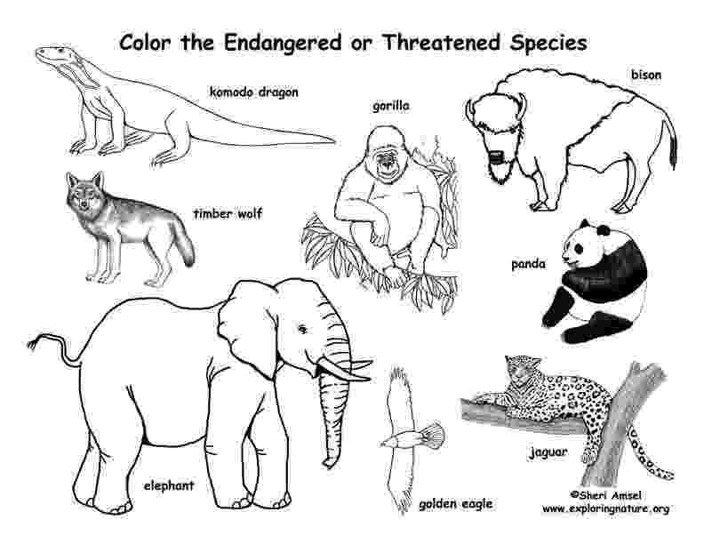 colouring pictures of extinct animals Χαρούμενο Δημοτικό Νοεμβρίου 2011 colouring of animals extinct pictures