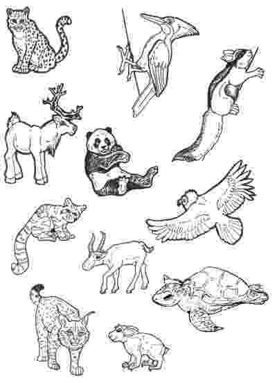 colouring pictures of extinct animals even more endangered animals by lemurkat on deviantart of animals pictures extinct colouring