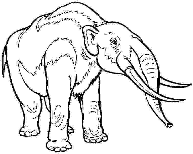 colouring pictures of extinct animals extinct animal of the week november 2015 extinct animals of pictures colouring
