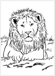 colouring pictures of lions lion coloring page free printable coloring pages pictures of lions colouring