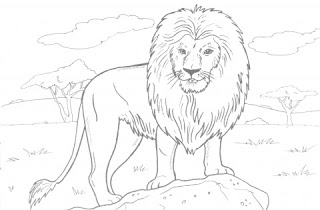 colouring pictures of lions lion coloring pages wecoloringpagecom lions colouring of pictures
