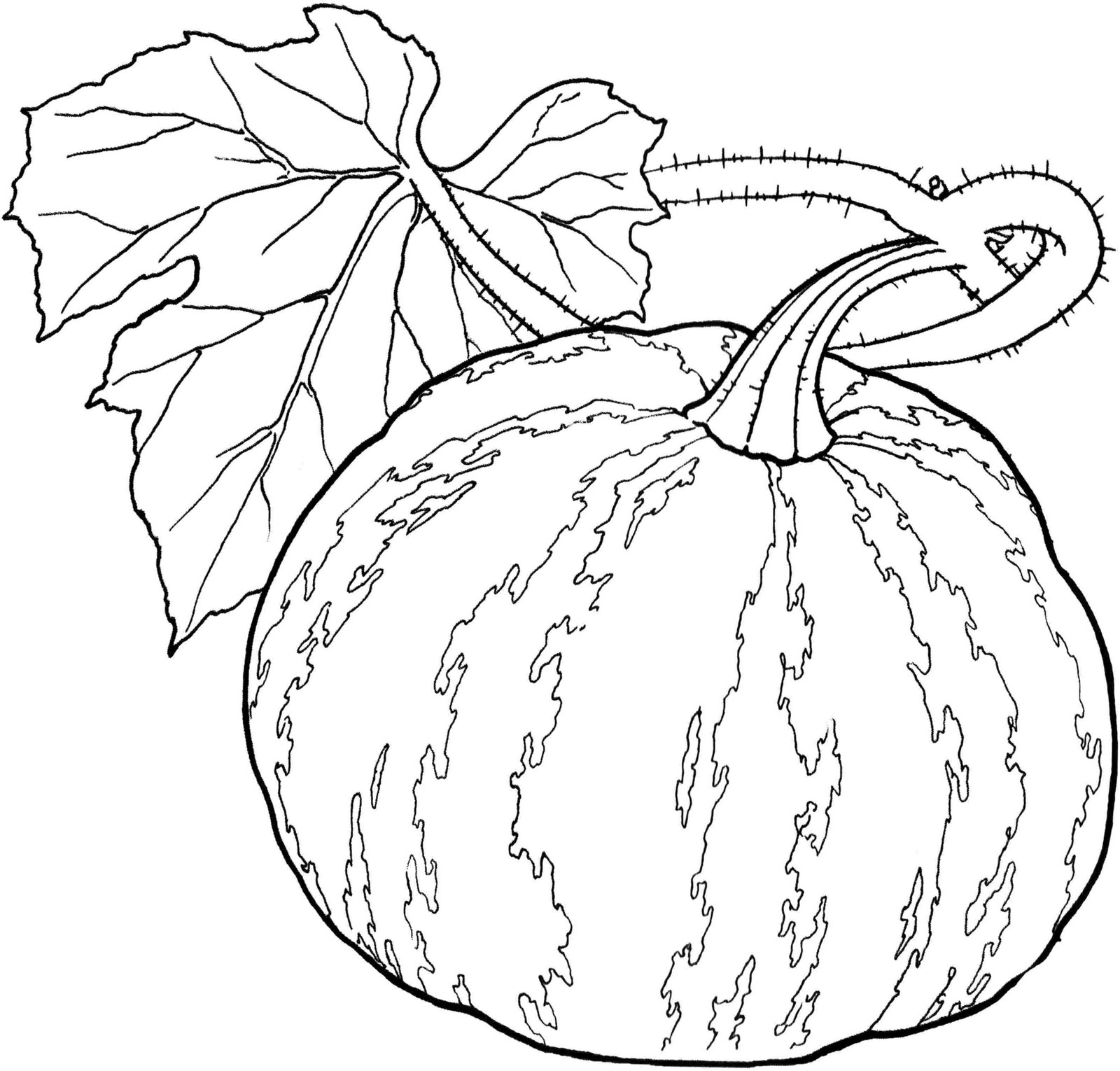 colouring pictures of vegetables free coloring pages of vegetable gardens colouring of vegetables pictures