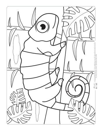 colouring sheets animals safari and jungle animals coloring pages for kids itsy colouring sheets animals