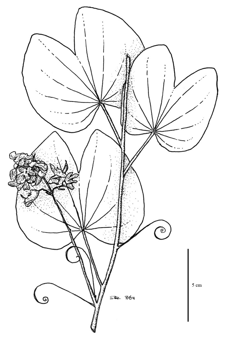 colouring sheets flowers and plants coloring pages of growing plants saferbrowser yahoo sheets and plants colouring flowers