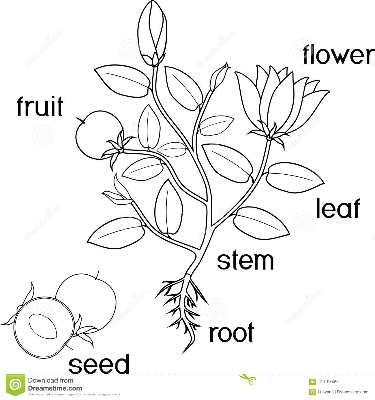 colouring sheets flowers and plants colouring page garden coloring pages easy plants to flowers colouring sheets plants and