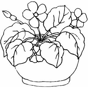 colouring sheets flowers and plants flowers in round pot coloring page and sheets flowers plants colouring