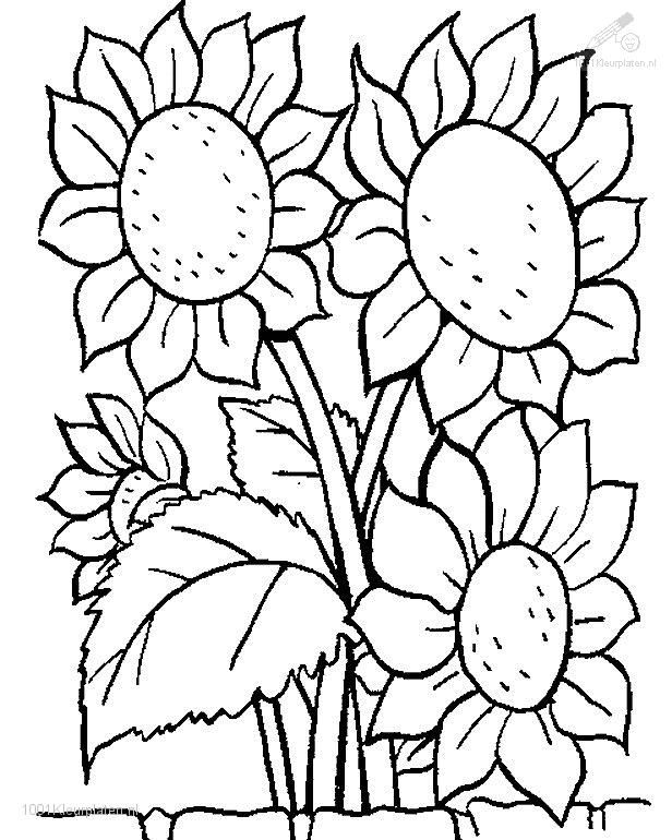 colouring sheets flowers and plants happy family art original and fun coloring pages plants sheets flowers and colouring