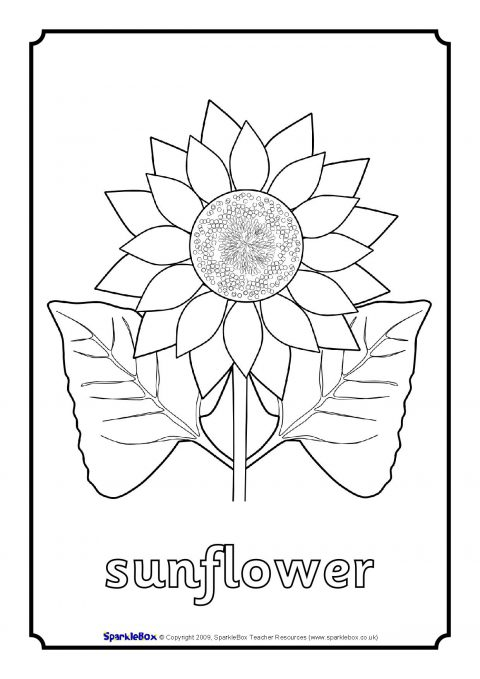 colouring sheets flowers and plants tropical plants and hibiscus flowers coloring book page colouring flowers plants and sheets