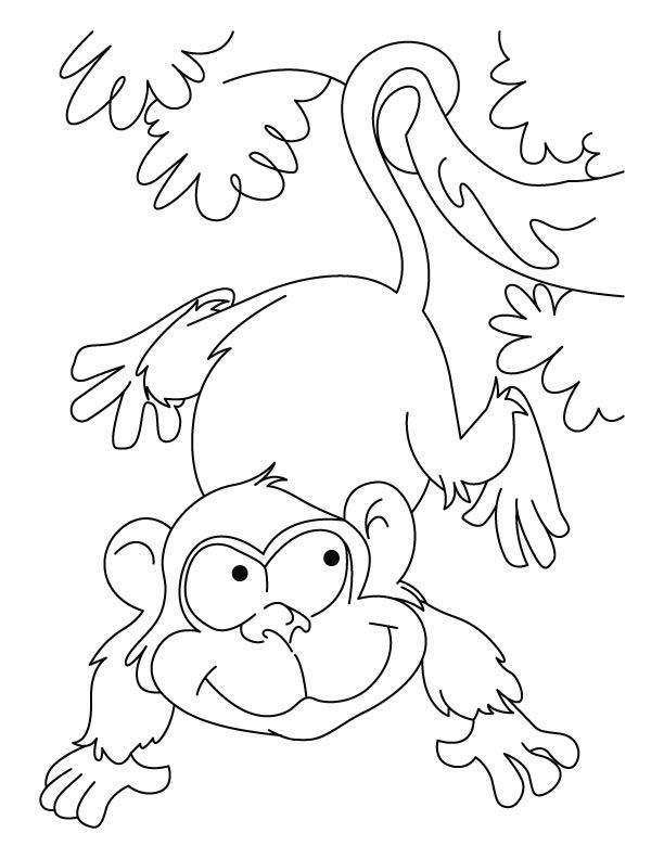 colouring wild animals 98 best images about wild animals coloring pages on colouring animals wild