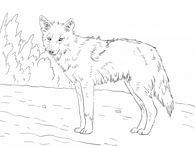 coyote pictures to print baby coyote coloring page free coyote coloring pages print coyote pictures to