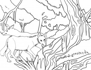 coyote pictures to print coyote coloring page free coyote coloring pages pictures print coyote to