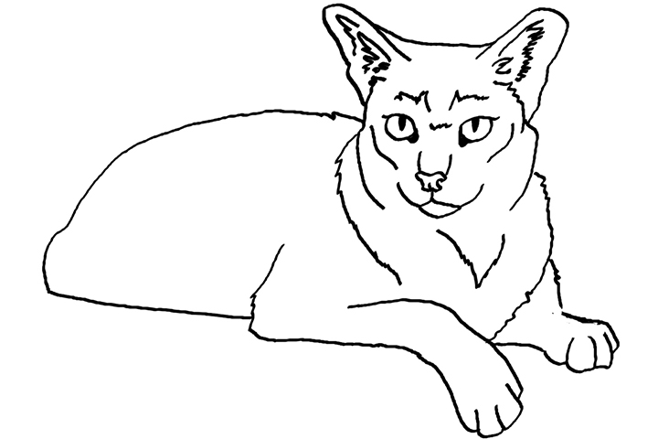 coyote pictures to print free coyote coloring page print to pictures coyote