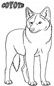 coyote pictures to print printable coyote coloring pages for kids cool2bkids to coyote print pictures