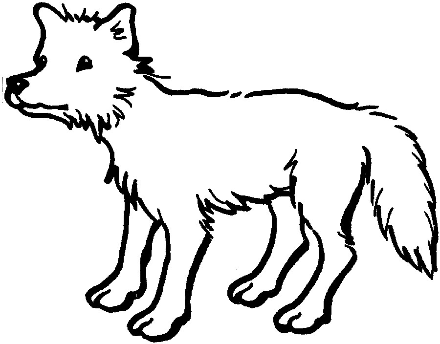 coyote pictures to print printable coyote coloring pages for kids cool2bkids to coyote print pictures 1 1