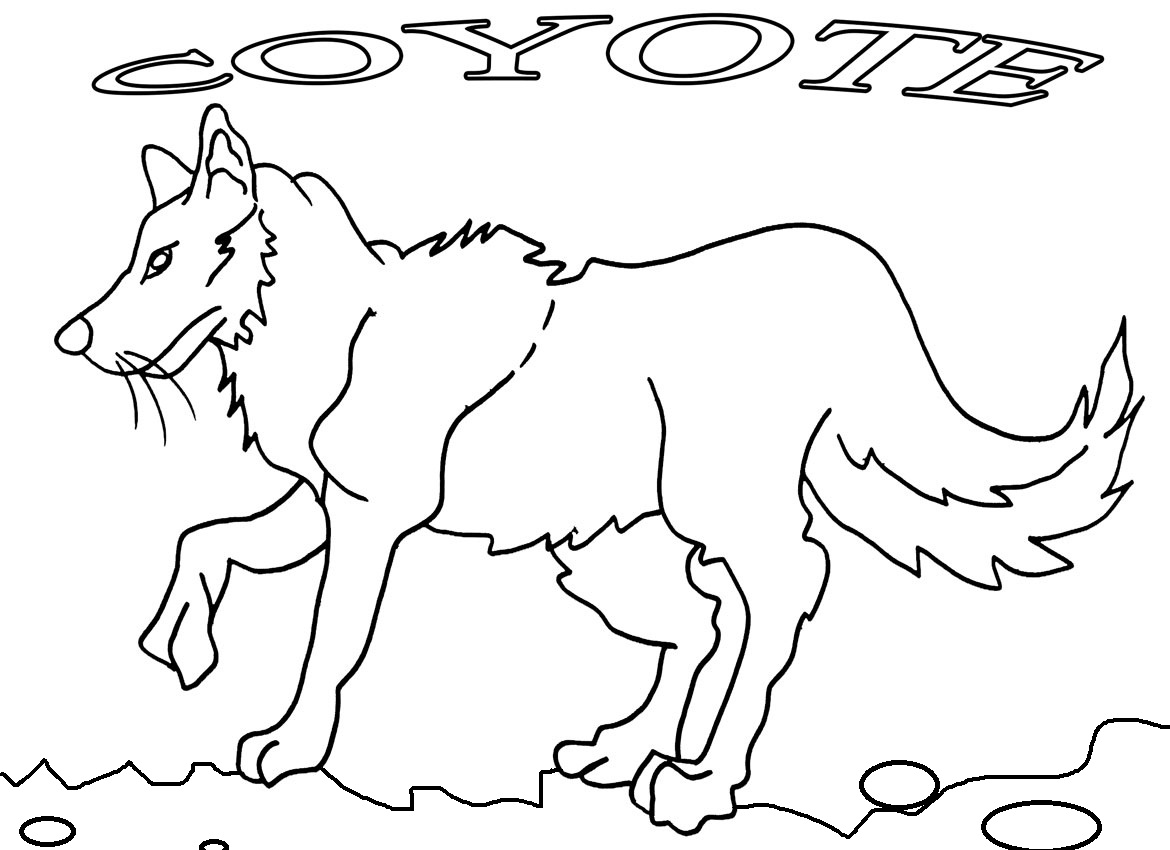 coyote pictures to print printable coyote coloring pages for kids cool2bkids to print coyote pictures
