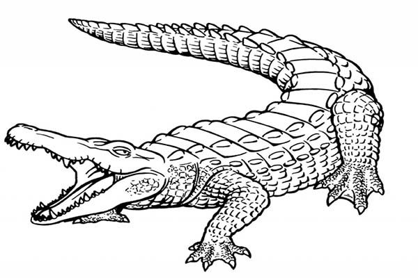 crocodile pictures to color crocodile alligator 3 coloring pages animal coloring book color to crocodile pictures