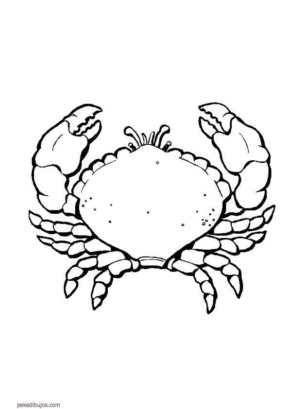 crustaceos dibujos crustaceos para colorear imagui dibujos crustaceos
