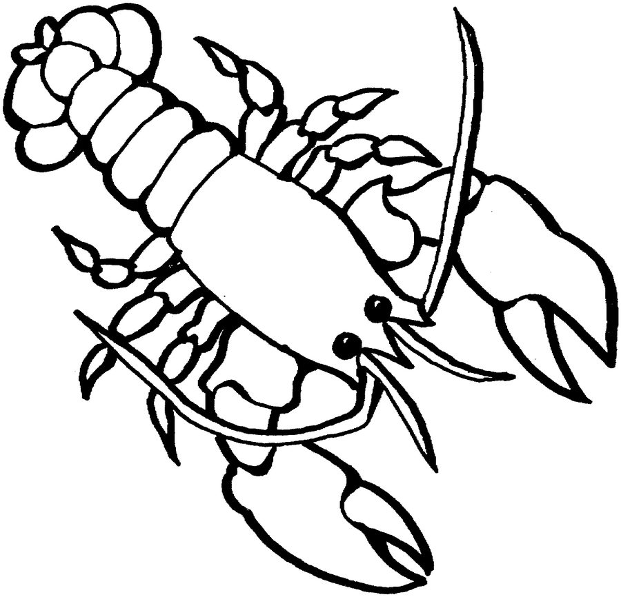 crustaceos dibujos dibujos de crustáceos para colorear dibujos crustaceos