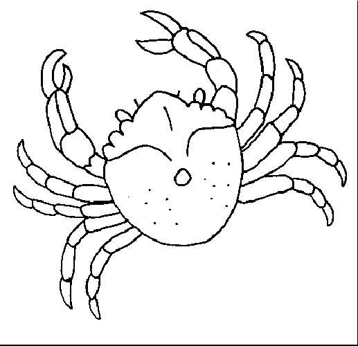 crustaceos dibujos dibujos para colorear crustáceos dibujos crustaceos 1 1