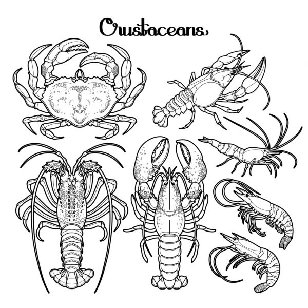 crustaceos dibujos dibujos para colorear langosta imprimible gratis para crustaceos dibujos