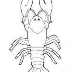 crustaceos dibujos dibujos para colorear langosta imprimible gratis para crustaceos dibujos 1 1