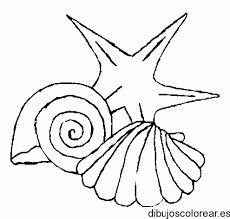 crustaceos dibujos menta más chocolate recursos y actividades para dibujos crustaceos