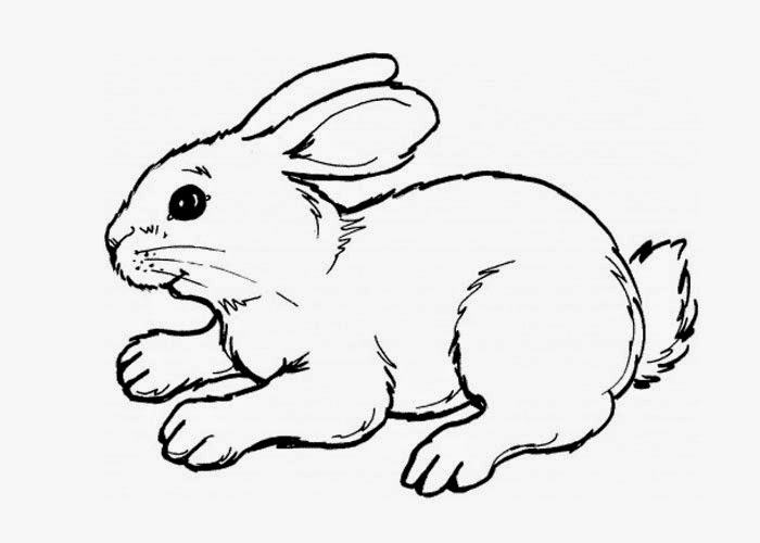cute bunny pictures to color cute coloring pages at getdrawingscom free for personal bunny pictures to cute color