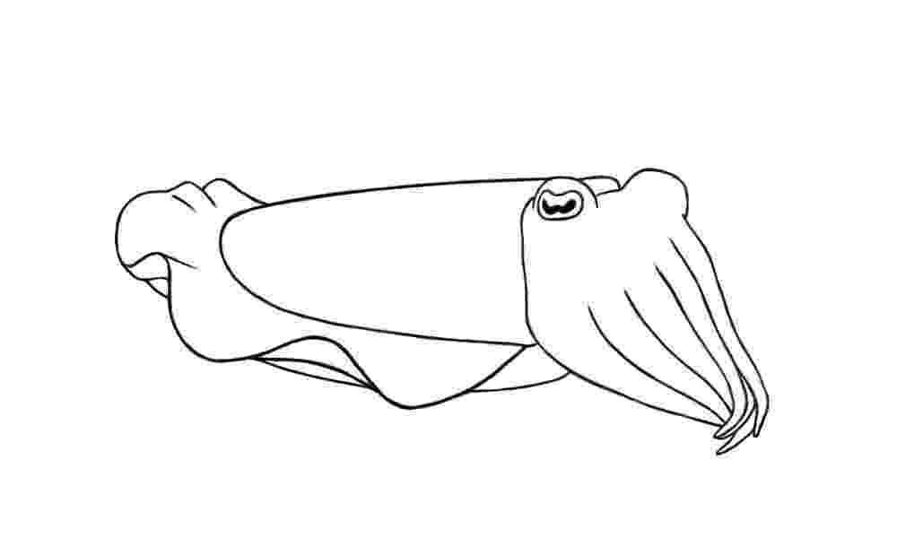 cuttlefish coloring pages flamboyant cuttlefish drawing sketch coloring page coloring pages cuttlefish