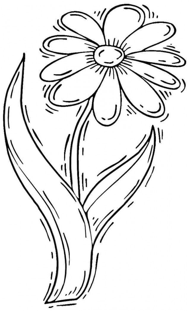 daisy flower colouring pages 58 best draw flowers images on pinterest flower designs pages flower daisy colouring