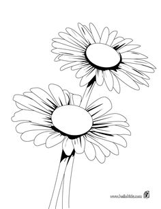 daisy flower colouring pages daisy coloring pages daisy colouring pages flower