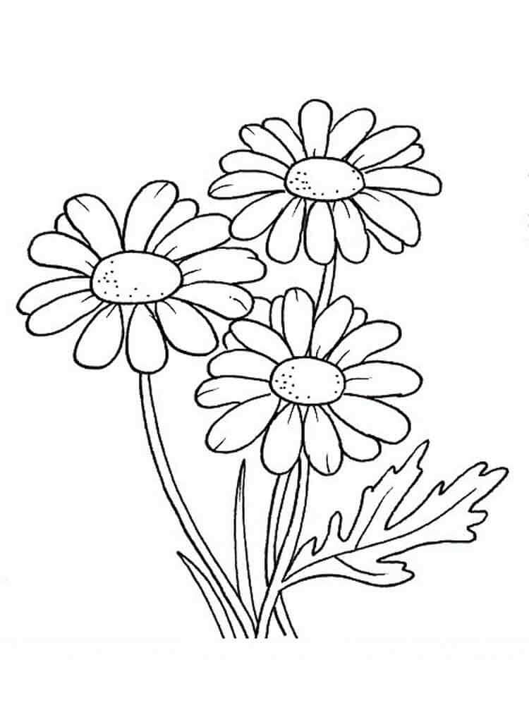 daisy flower colouring pages daisy flower coloring page free printable coloring pages flower colouring pages daisy