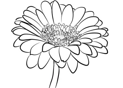 daisy flower colouring pages daisy flower outline clipartsco daisy flower colouring pages