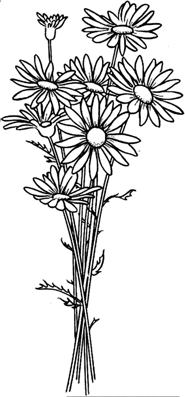daisy flower colouring pages daisy flower outline free download on clipartmag pages flower daisy colouring