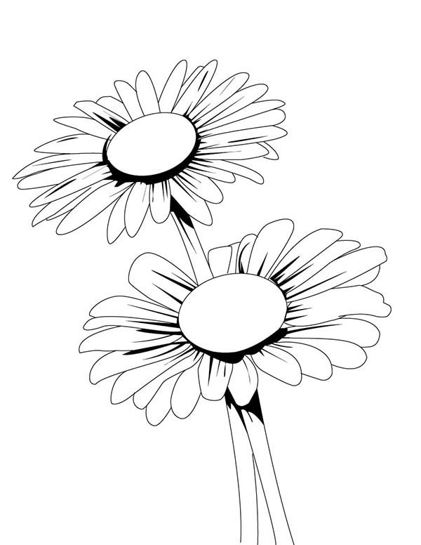 daisy flower colouring pages gerber daisy coloring pages download coloring for kids 2019 pages flower daisy colouring