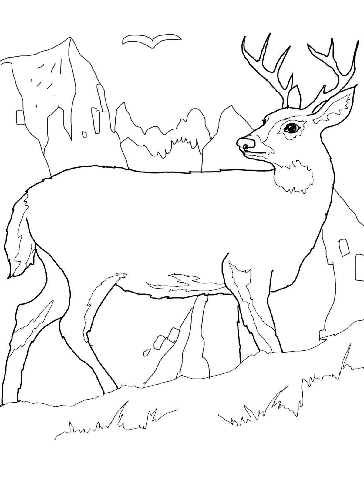 deer coloring page baby deer coloring pages printable kids colouring pages deer coloring page