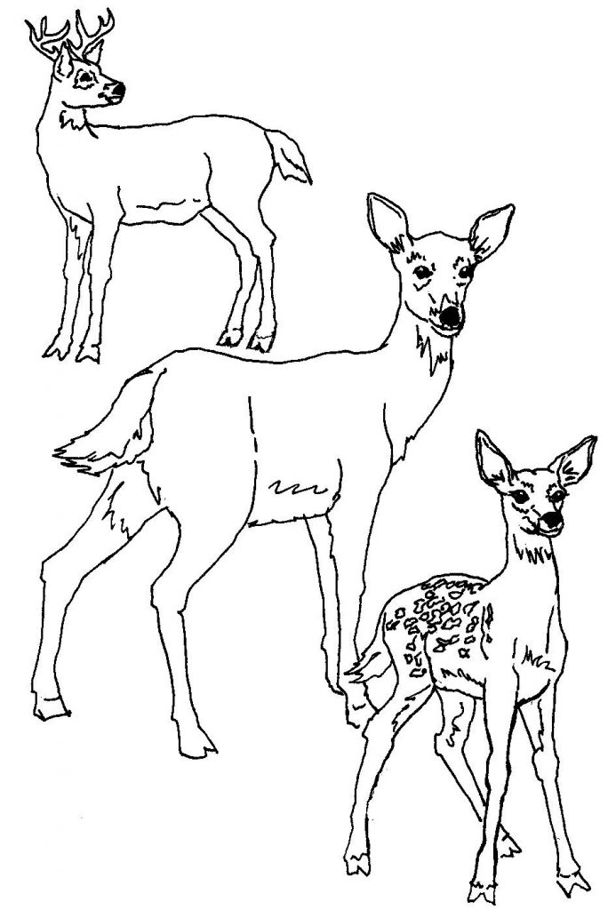 deer coloring page deer coloring pages sketch coloring page deer page coloring