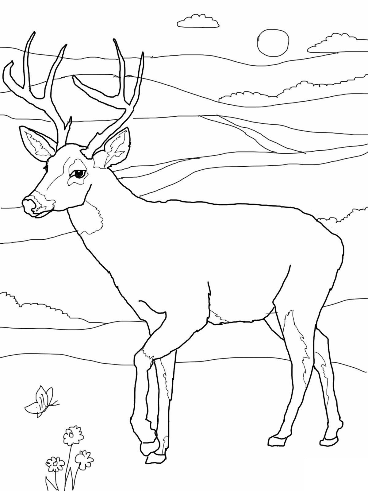 deer coloring page for education new animal deer coloring pages deer page coloring