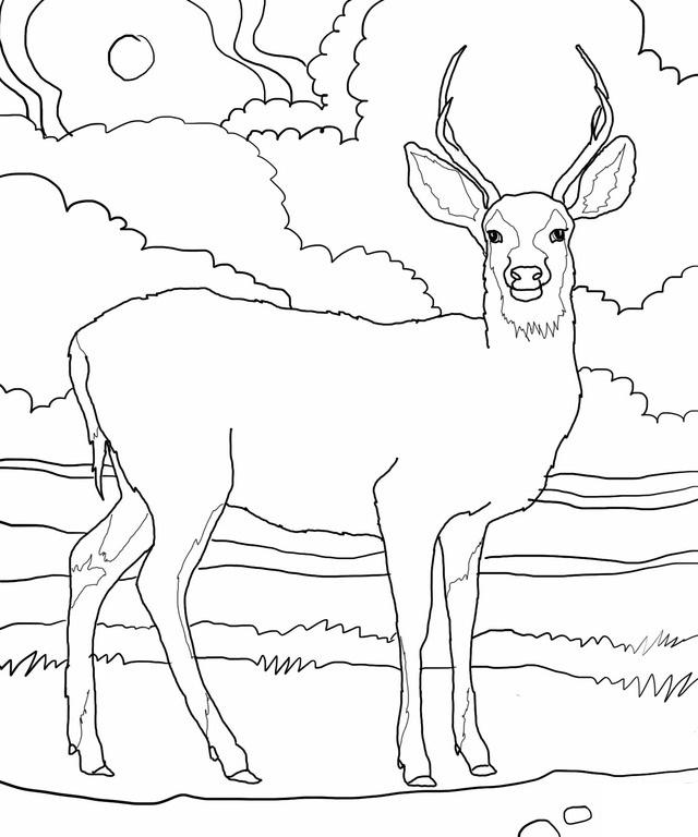 deer coloring page free printable deer coloring pages for kids coloring page deer