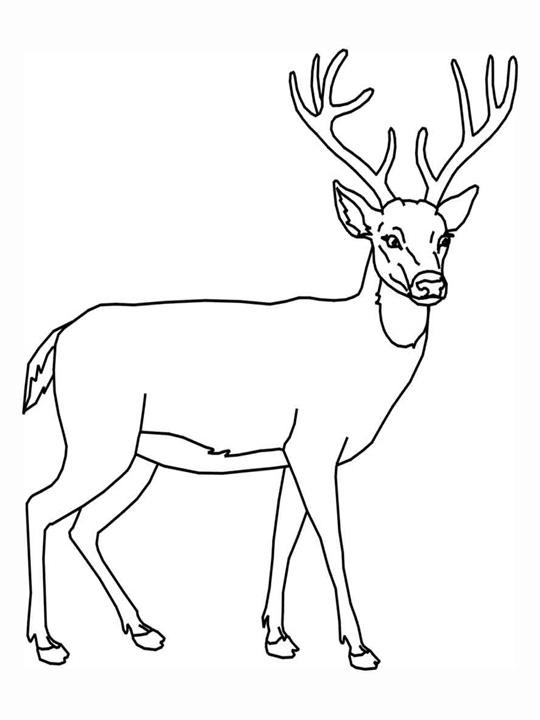 deer coloring page free printable deer coloring pages for kids page coloring deer